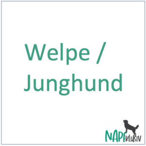 Welpe / Junghund
